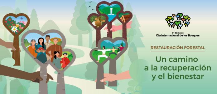 dia-internacional-bosques